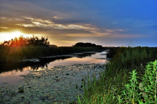 4-marsh-at-dusk