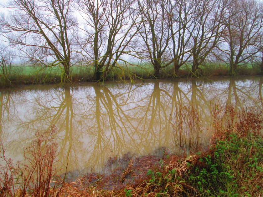 mysterious-trees-and-reflections