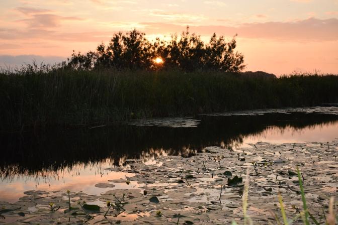 Marsh by Dusk 5