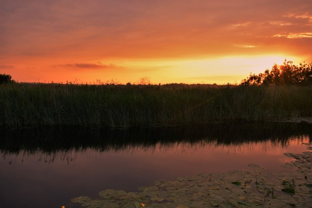 moody-marsh