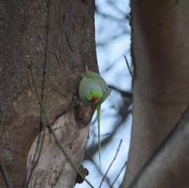 parrot-hanging