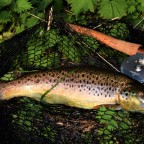 Cherry Brandy and Brown Trout