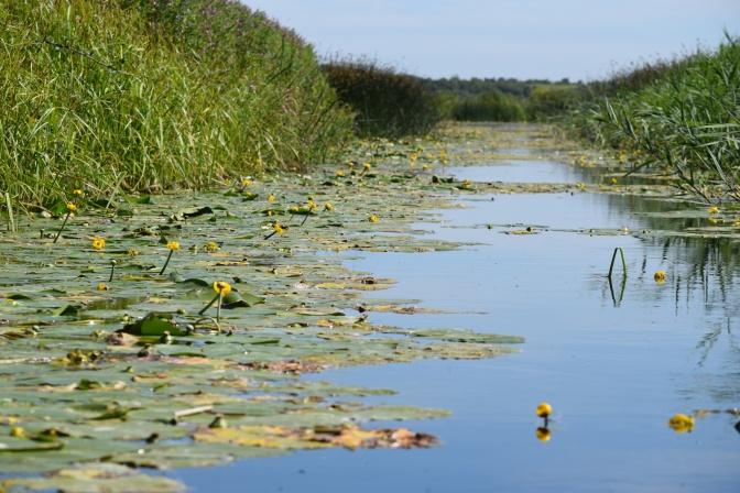 Kentish marshes