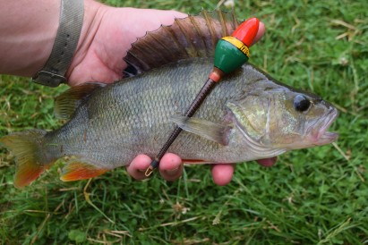 Stour Perch July 2017
