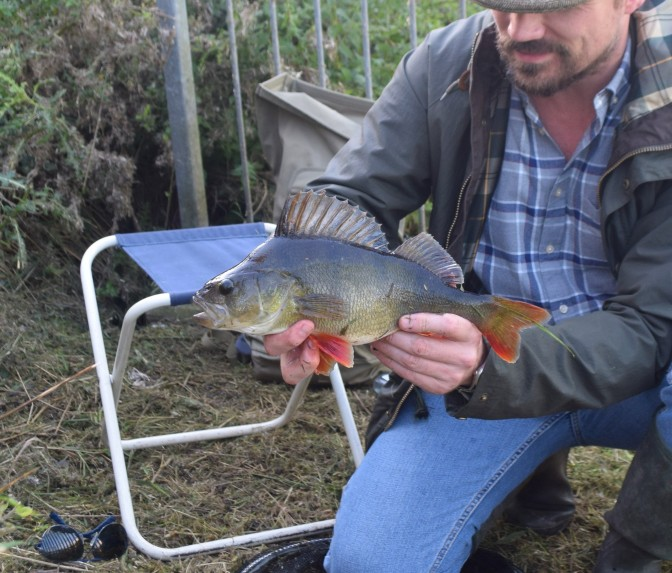 Close up, first trophy perch- eastern dykes