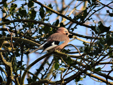 Jay of St Laurence Church, Ramsgate