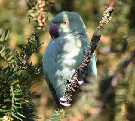 Hidden Parrot