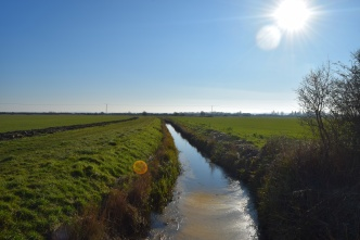 Kentish marshland dyke. In February, believe it or not.