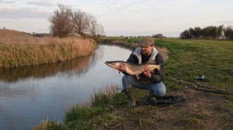 Pike on the levels